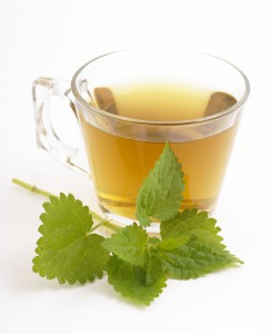 Nettle tea in glass on white background